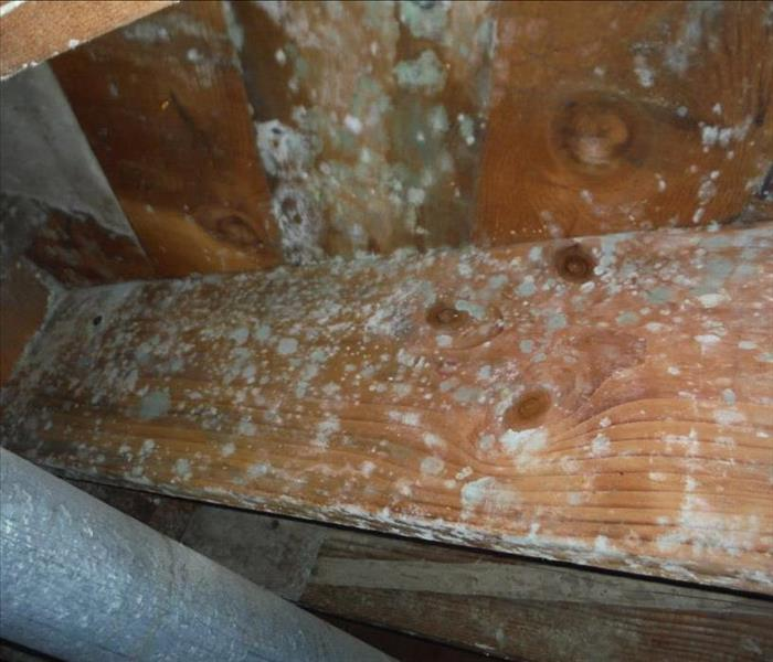 Mold Remediation Does Your Kirkland Home Have A Mold Problem?